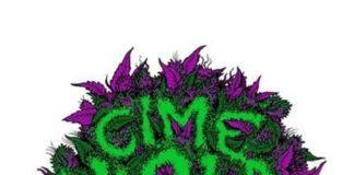 Gast - Cime Viola Mixtape